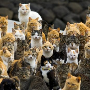 3 vietos kačių mylėtojams, kur pasijusite lyg rojuje: čia jų keliskart daugiau nei žmonių