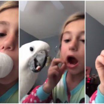 Išvyskite, kaip papūgėlė 11-metei išrauna pieninį dantį
