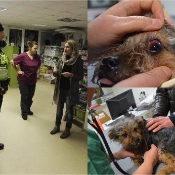 Kėdainiuose moteris įvykdė žiaurią šunelio egzekuciją