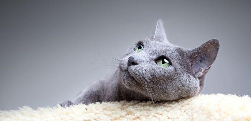 """Kaip išmokyti katę atlikti reikalus tualete """"žmogiškai""""?"""