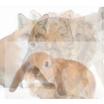 Kokį gyvūną pamatėte pirmą? Tai atskleidžia jūsų charakterį