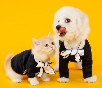 Kompiuterinė tomografija šunims ir katėms