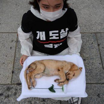 Pietų Korėjoje vienos didžiausių šunų prieglaudų vadovė apkaltina keturkojų žudymu