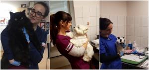 Vet. gydytoja ir klinikos savininkė Viktorija Lokianskienė. Papildomai baigė LSMU VA chirurgijos rezidentūrą. ESVD (European Society of Veterinary Dermatology) narė, FECAVA atstovė Lietuvai (Federation of European Companion Animal Veterinary Associations). LSGVGA tarybos narė (Lietuvos Smulkiųjų Gyvūnų Veterinarijos Gydytojų Asociacija). Specializacija: dermatologija, endokrinologija; vidaus ligos, ultragarsinė diagnostika, onkologija. Vet. gydytoja Monika Valkauskienė.Specializacija: Dermatologija; vidaus ligos; gastroenterologija. Vet. gydytoja Rūta-Noreikaitė-Bulotienė.Papildomai baigė LSMU VA chirurgijos rezidentūrą ir doktorantūrą. LSGVGA narė. Specializacija: ortopedija; traumatologija; plastinė chirurgija; minkštų audinių chirurgija; neurologija. Vet. gydytoja Greta Varanavičiūtė.Specializacija: kardiologija (tai pat ir EKG, širdies ultragarsinė diagnostika su dopleriu); ultragarsinė diagnostika; oftalmologija; vidaus ligos; papūgų gydymas. Vet. gydytoja Ieva Šidlauskaitė. LSGVGA narė. Specializacija: anesteziologija (taip pat ir regioninė anestezija); minkštų audinių chirurgija; rentgenologija. Vet. gydytoja Indrė Zakienė. EVDS narė (European Veterinary Dentistry Society). LSGVGA narė. Specializacija: gyvūnų odontologija; triušių, šeškų, graužikų gydymas (šinšilos, jūrų kiaulytės, žiurkėnai ir kt.) ir jų anestezija.