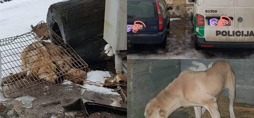 Šiaulių r. – vaizdai lyg iš siaubo filmo: rasti iš bado dvesiantys gyvūnai, gaišenos gulėjo šalia