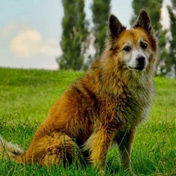 Šuo – geriausias žmogaus draugas, bet grėsmė laukinei gyvūnijai?