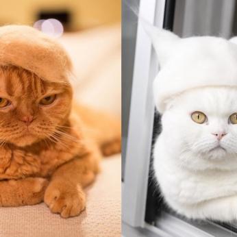Kačių šėrimosi metas: puiki idėja kaip panaudoti katės plaukus praktiškai