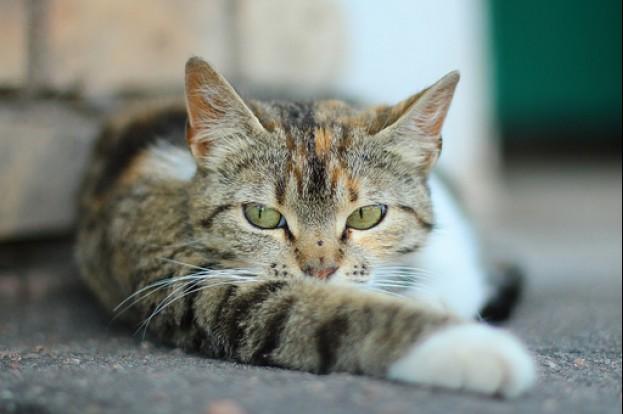 Katė, užstrigusi rate