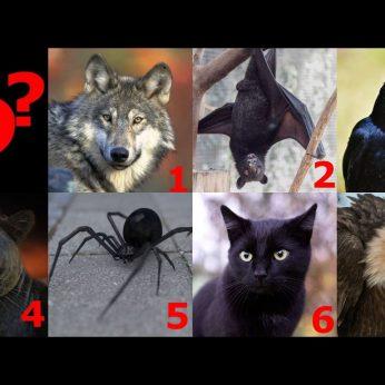 Kuris gyvūnas patraukė akį? Išaiškės tamsioji jūsų asmenybės pusė
