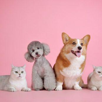 Mėgstantys kates vs. dievinantys šunis