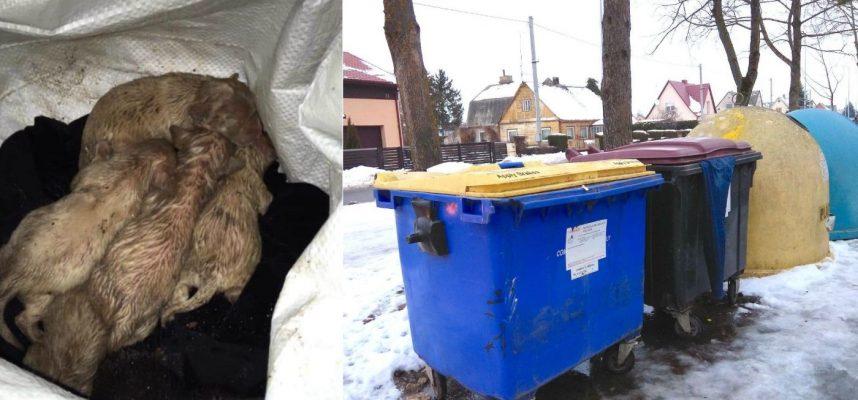 Neįtikėtinas žiaurumas Kėdainiuose: šiukšlių konteineryje paliko šešis šuniukus
