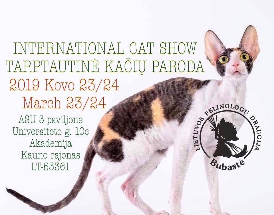 Tarptautinė Kačių paroda Kaune'19/ Int.Cat Show Kaunas'19