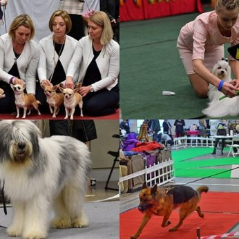 Šunų mylėtojai šį savaitgalį renkasi Vilniuje – sunku atitraukti akis nuo pačių gražiausių!