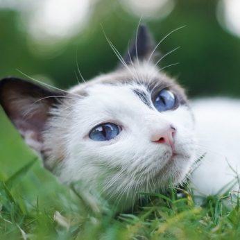 Kačių alerginės ligos kodėl atsiranda alergija augintiniui ir kaip jam padėti