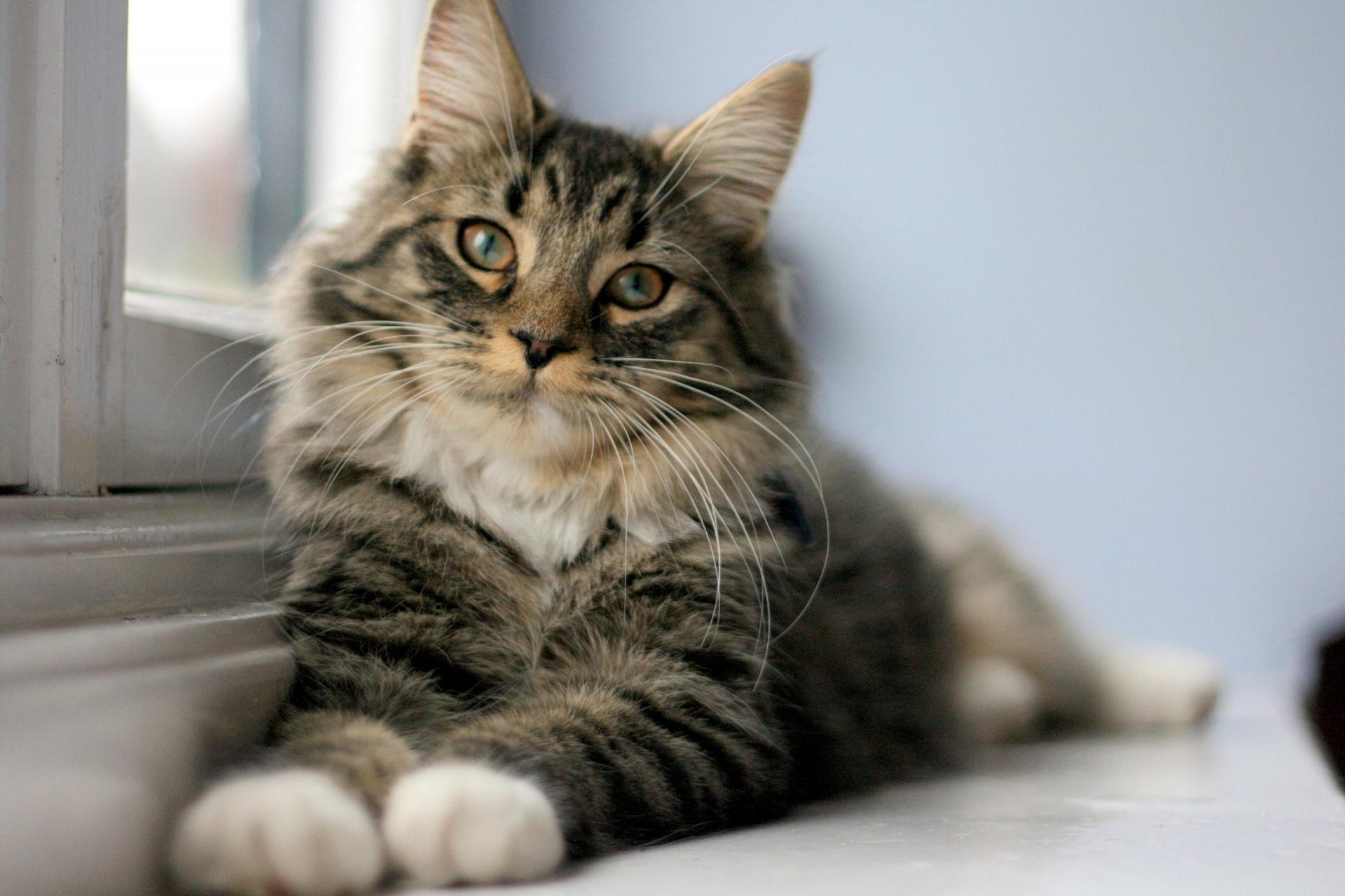 širdies sveikatai galvok katė vaistai nuo hipertenzijos su raide l