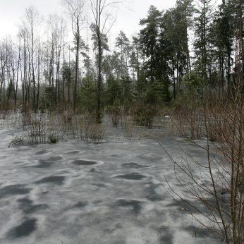 Kauno r. miške tarp šiukšlių pamatė spurdantį leisgyvį šuniuką