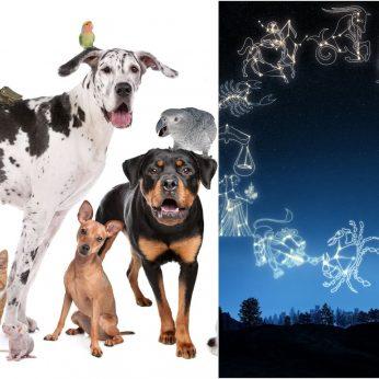 Kokį gyvūną jums siūlo rinktis astrologai: pasižiūrėkite į Zodiako ženklą