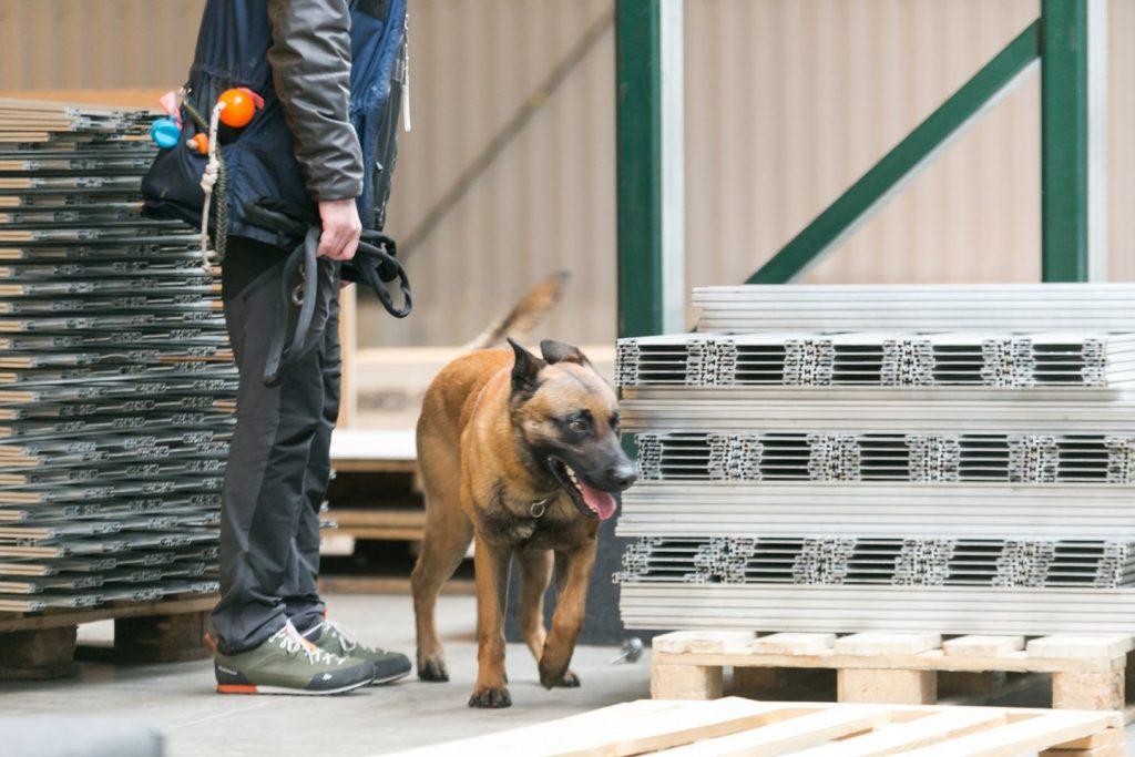 Sprogmenų ieškantys tarnybiniai šunys dalyvauja sprogmenų paieškose mokymuose. T.Bauro nuotr.