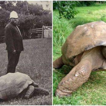 Susipažinkite su seniausiu žemėje gyvenančiu gyvūnu – vėžliu Jonathanu