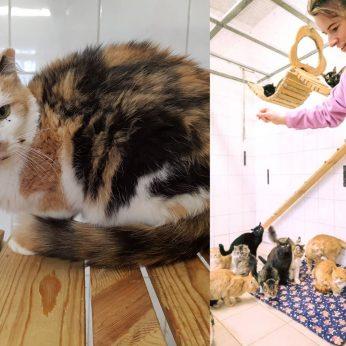 Vilniuje pradėtos sterilizuoti benamės katės: ragina padėti gyvūnams