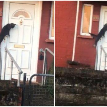 Į duris besibeldžianti katė savo mandagiu elgesiu sužavėjo internautus