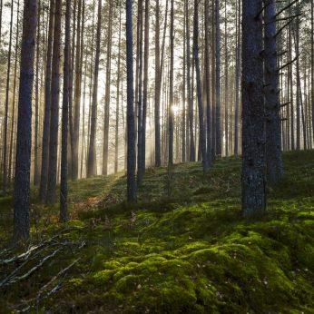 Šiurpą keliantis radinys Šakių r.: vyras pastebėjo ant medžio šakos pakartą šunį