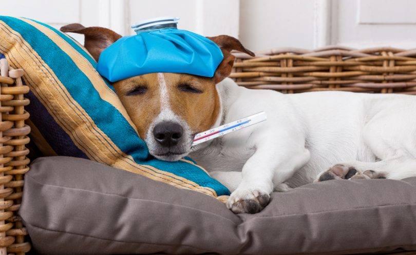 Ar žinojote, kad šunų ir kačių kūno temperatūra yra aukštesnė nei žmogaus