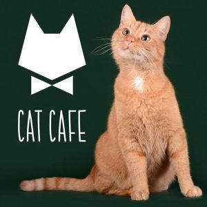 Cat Cafe Vilnius Kačių Kavinė