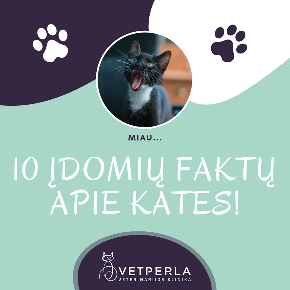 Dešimt įdomių faktų apie kates