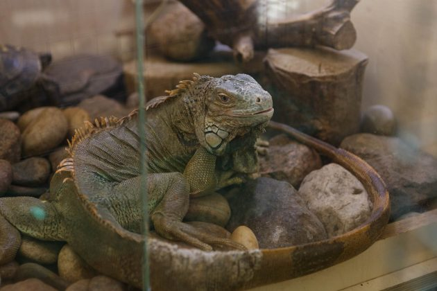 Gamtos mokykloje gyvena dar apie 180 gyvūnų – iš viso 48 rūšių.
