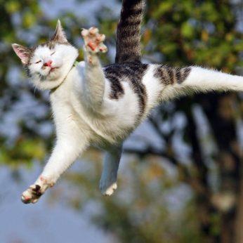 Išsiaiškino, kaip katės išgyvena kritimus iš didelių aukščių
