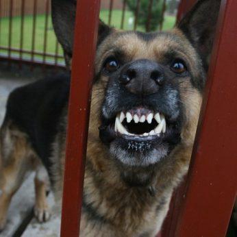 Jei auginate šunį, šiukštu nedarykite šių klaidų: gali baigtis tragedija