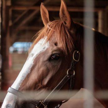 Kai supratau, kad žirgų lenktynės yra blogybė…