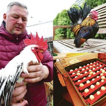 Kaunietis augina egzotinius paukščius, tarp jų – pelnęs Europos vicečempiono titulą