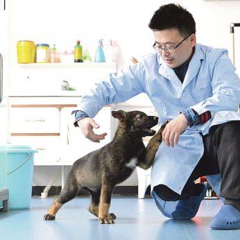 Kinijos mokslininkai klonavo šunų Šerloką Holmsą – per brangu ruošti naujus