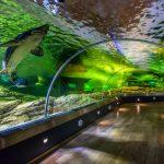 Lietuvos jūrų muziejaus akvariumas