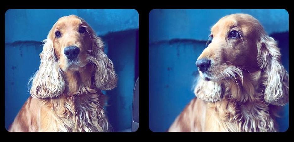 O gyvūnų fotografija reikalauja ne tik gerų techninių įgūdžių, bet ir begalinės meilės mūsų keturkojams augintiniams.