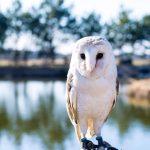 Owlspark.lt pelėdų parkas.