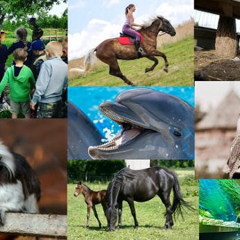 Populiariausios pramogų vietos Lietuvoje gyvūnų mylėtojams