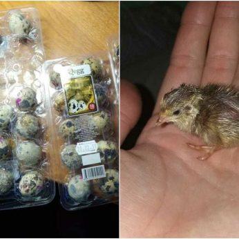 Priešvelykinis stebuklas: gyvybė atsirado iš parduotuvėje pirktų kiaušinių