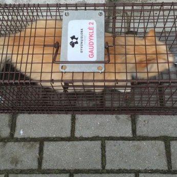 Prisiminė benamių kačių problemą – už vieną teks pakloti 55 eurus