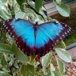 Tropiniai Smiltynės drugeliai