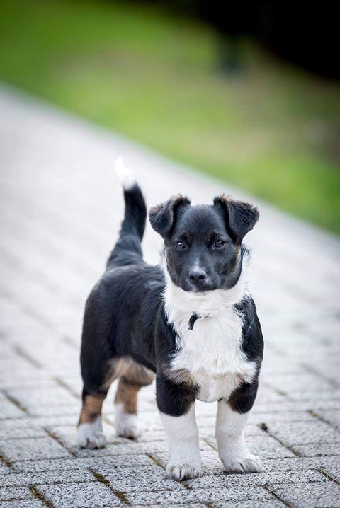 dovanojami šuniukai kaune