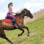 stovyklos ir edukacinė programa vaikams su žirgais