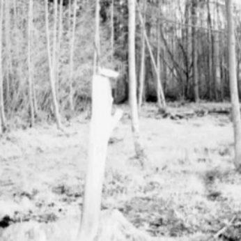 Į Biržų girią užklydusią mešką miškininkas lepina medumi