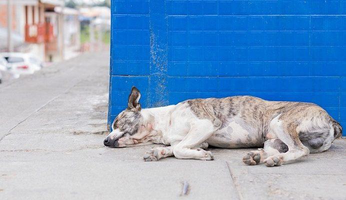 12 mėnesių kalėjimo arba 10.000 eurų bauda už skriaudžiamą ar išmestą gyvūną!