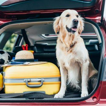 4 patarimai, padėsiantys saugiai vežti augintinį automobiliu