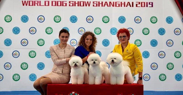 Bišonai iš Lietuvos parsivežė glėbį Pasaulio šunų parodos apdovanojimų