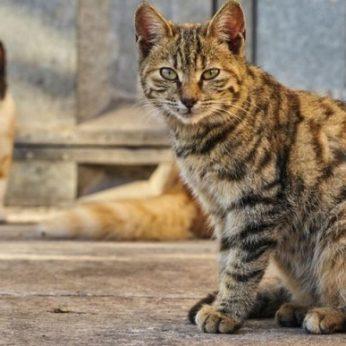 Humaniškos kačių populiaciją mažinančios priemonės nefinansuojamos: katės žudomos savivaldybės pinigais