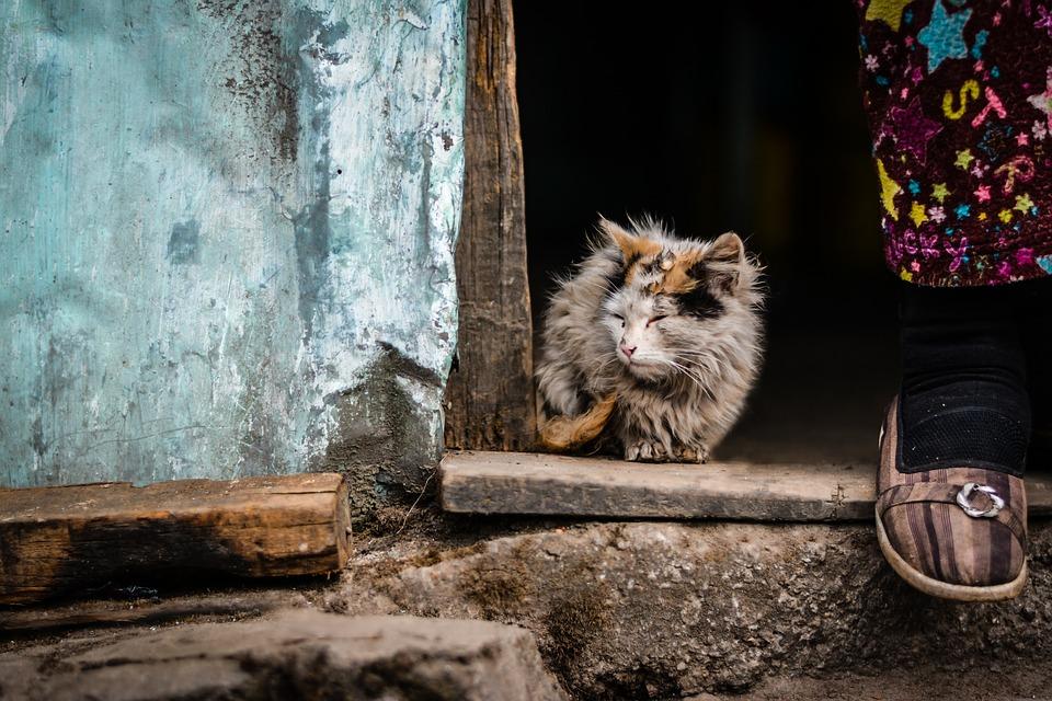 Italijoje gyvūnų atsisakymas yra laikomas nusikaltimu.